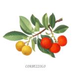 CARBEZZOLO