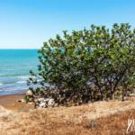 Il fico e il suo profumo: un viaggio nella costa ionica della Puglia